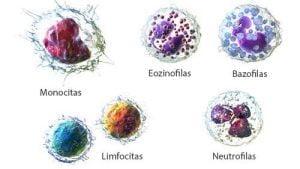 leukocitu tipai